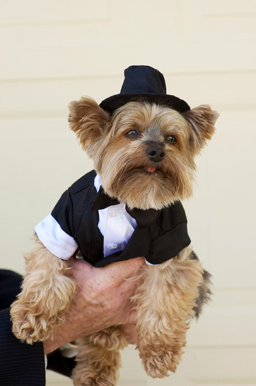 kandj_wedding_dog