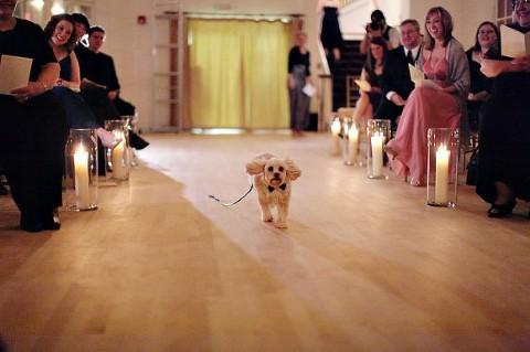 Dog Wedding Ceremony