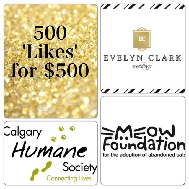 Help us donate $500 to Calgary Humane Society :: MEOW Foundation